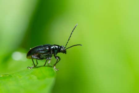 Macro blue beetle Stock Photo