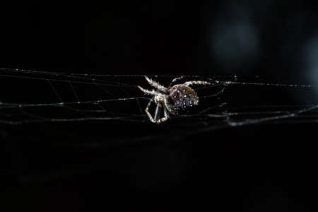 Macro spider on spider web 写真素材