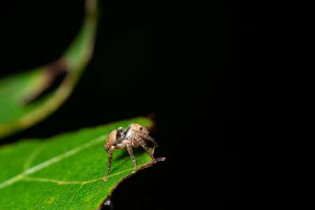 Macro spider in nature Stok Fotoğraf