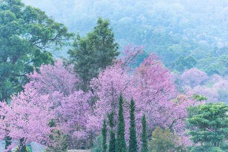 Nature view trees Foto de archivo