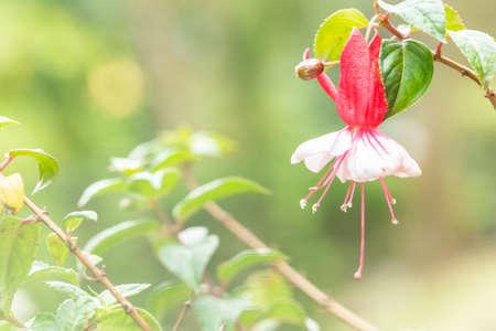 Colorful flower macro Imagens
