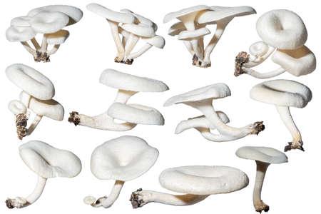 Including white mushrooms, white background Stock Photo