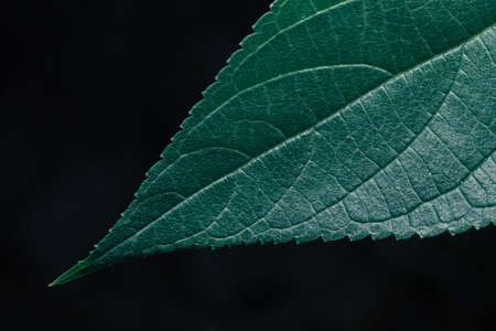 Green leaves Plant color tone dark  background