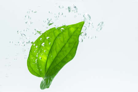 Leaves in the water with bubbles White background