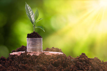 growing seed coins money plant on with a blurred green background