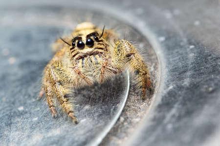Yellow spider macros