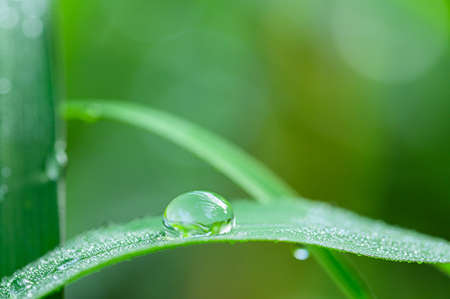 The concept of love the world green environment Water droplets on the leaves Blurred bokeh background Stock fotó