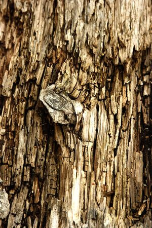 splintered: KNOT IN ROTTED WOOD