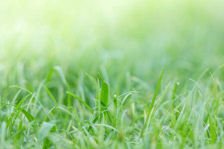 defocus: defocus grass filed background, green nuture background