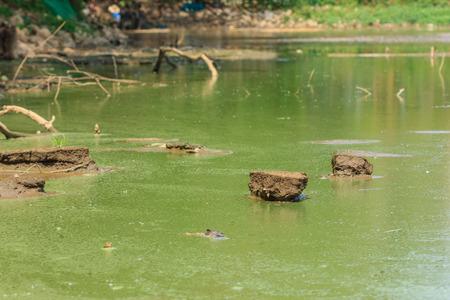 waste water: waste water, green water Stock Photo