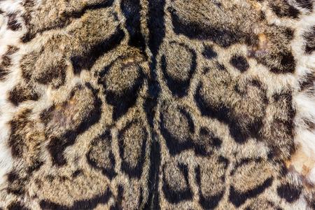 motif de la vraie peau de léopard