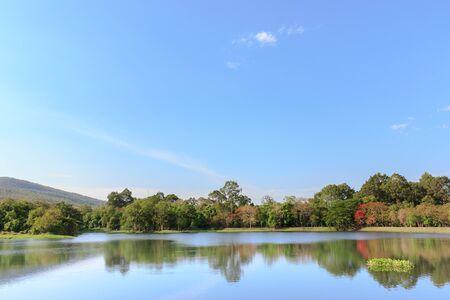 bayou: swamp and sky view