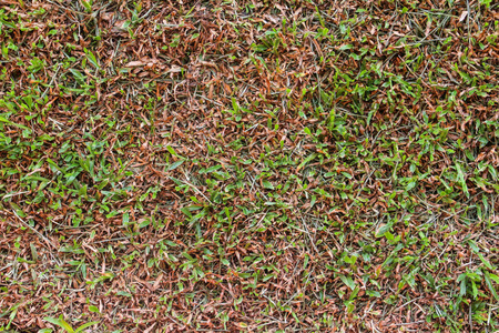 Pests and disease cause amount of damage to green lawns Stock Photo