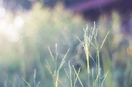 Grass on bokeh background photo
