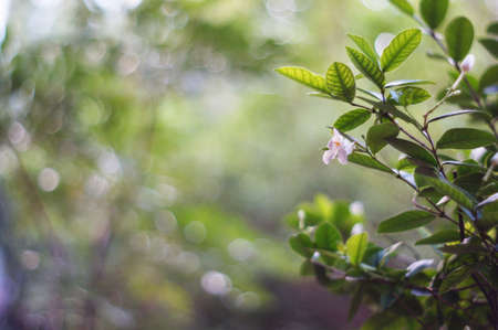 White flower on bokeh background Stock Photo - 22008486