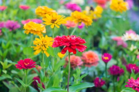 flores fucsia: Flores de fucsia sobre fondo borroso