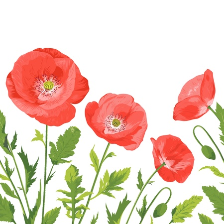 beautiful poppies bouquet  Vector