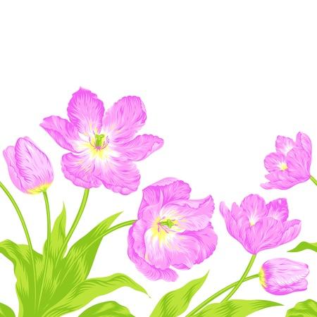 Vector illustration of beautiful pink tulips bouquet Stock Vector - 18162182