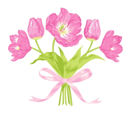 bow: Vector illustration of beautiful pink tulips bouquet