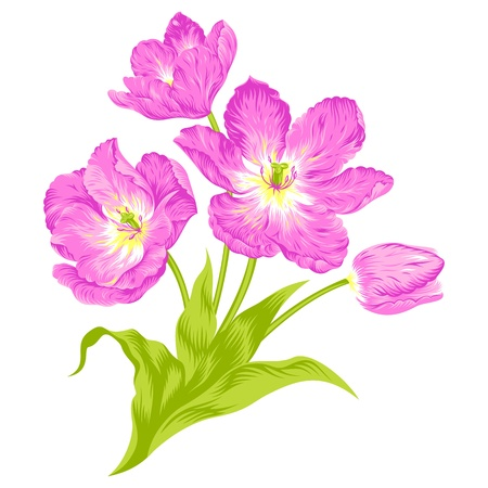 marriage bed: Vector illustration of beautiful  tulips bouquet