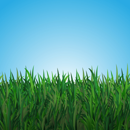 herbage: Field with green grass on the blue background. Illustration