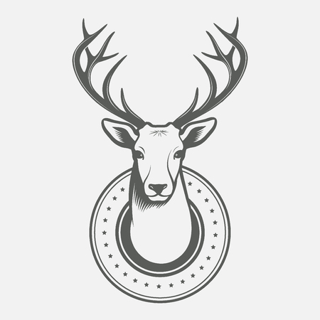 whitetail deer: Deer head