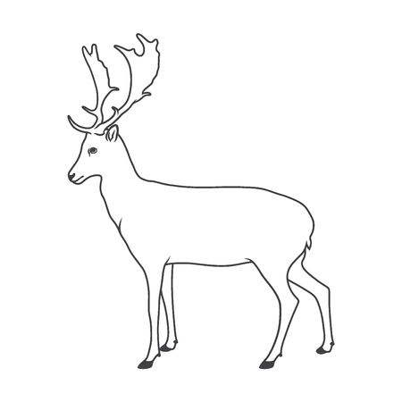 hoofed mammal: Wild deer. Vector illustration of royal stag. Isolated on white.