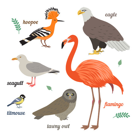 tawny owl: Set of birds. illustration of different colorful birds. Flamingo, seagull, american eagle, titmouse, grey owl and hoop. Isolated on white background. Flat design.