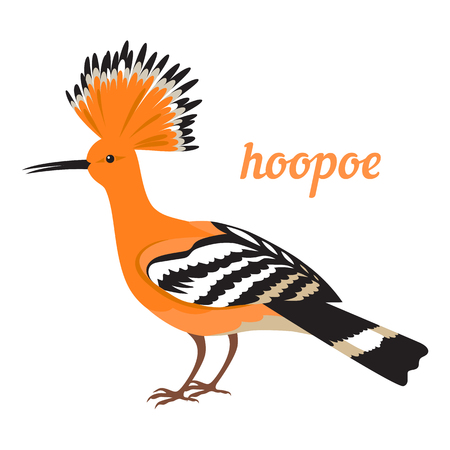 Colorful illustration of african bird - hoopoe. Vector icon. Isolated on white background. Flat design.