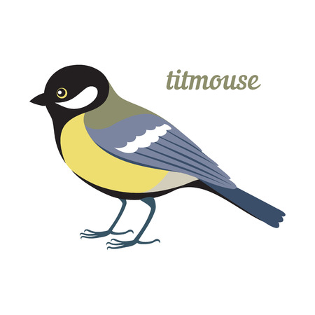 chickadee: Colorful illustration of titmouse. Vector bird icon. Isolated on white background. Flat design.