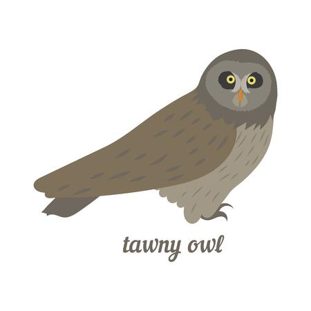 tawny: Colorful illustration of grey owl. Vector bird icon. Isolated on white background. Flat design.