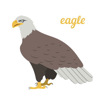 Colorful illustration of american eagle. Vector bird icon. Isolated on white background. Flat design.