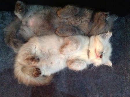 otganimalpets01: Our little kittens