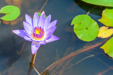 photo of small lotus in the lake Imagens