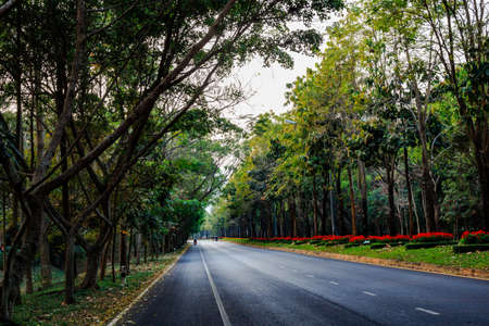 straight line: Straight line street with two side green tree