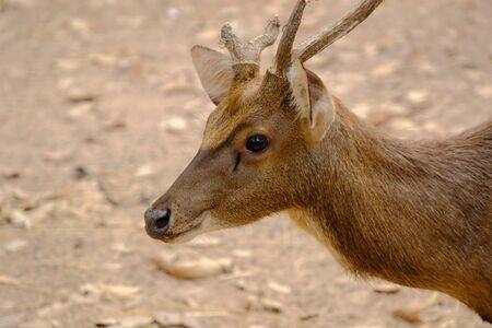 Deer in the park very felling good when looking,