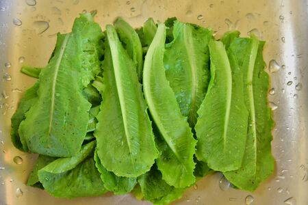 Cos Lettuce vegetable raw material of salad very delicious and good meal.