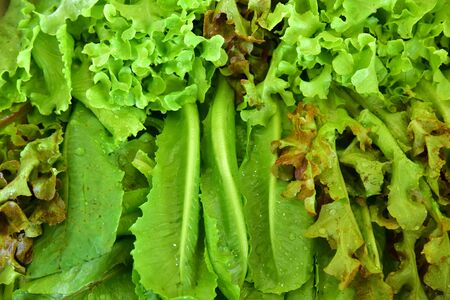 Vegetables are law material for healthy cooking of salad very good meal. Stok Fotoğraf