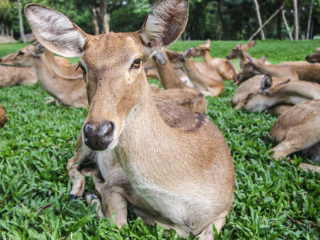 feamle deer on the grass Stock Photo - 13953862