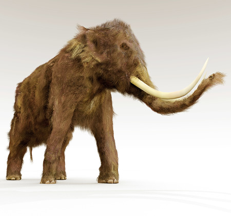 An illustration  of a Woolly Mammoth on a white background. The woolly mammoth was a species of mammoth living during the early Pliocene.