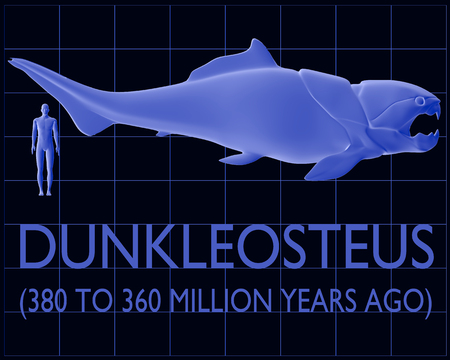 predators: An illustration comparing an average height human with the enormous prehistoric predator fish known as Dunkleosteus of the Late Devonian Period (380 to 360 million years ago).