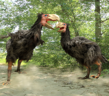 extinct: An illustration of two male Gastornis fighting over a nested territory.  Gastornis are an extinct genus of large flightless birds that lived during the late Paleocene and Eocene epochs of the Cenozoic era. They grew to a height of 6.6 feet.