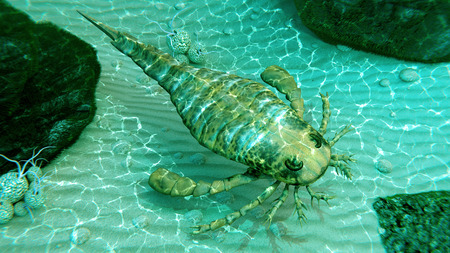 An illustration of eurypterus exploring sea floor. Eurypterids are related to arachnids and include the largest known arthropods to have ever lived. They were formidable predators that thrived in warm shallow water, in both seas and lakes, from the mid Or