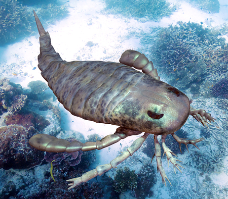 huge: An illustration of eurypterus exploring sea floor. Eurypterids are related to arachnids and include the largest known arthropods to have ever lived. They were formidable predators that thrived in warm shallow water, in both seas and lakes, from the mid Or