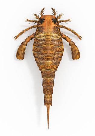 exoskeleton: Eurypterus remipes Sea Scorpion Stock Photo