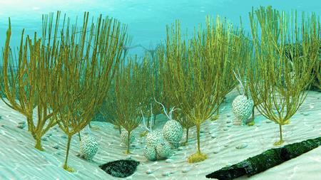 Dictyonema로 알려진 멸종 된 해양 동물의 식민지와 Ordovician 바다 장면의 3 차원 컴퓨터 그림.
