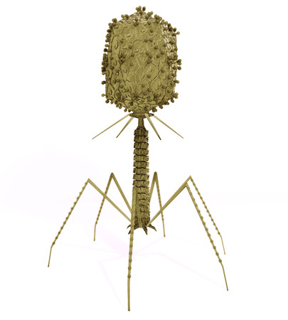 Bakteriophagen-Virus: Eine Abbildung des Bakteriophagen-Virus, die infiziert und repliziert in einem Bakterium. Standard-Bild - 43140766