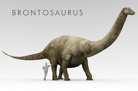 Een illustratie van de onlangs omgedoopt dinosaurus Brontosaurus vroeger bekend als Apatosaurus afgebeeld naast een gemiddelde hoogte van de mens. Brontosaurus was een grote uitgestorven soort van sauropoddinosaurus.