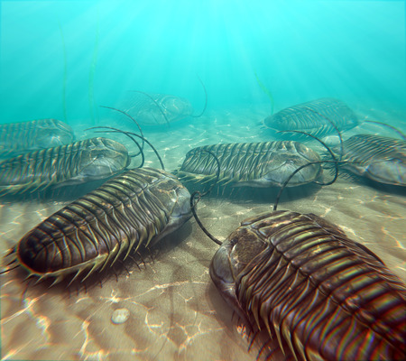 An illustration of trilobites moving about on the bottom of a warm Paleozoic sea. Stock Photo
