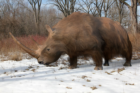 An illustration of the extinct Woolly Rhinoceros slowing making his way through an Ice Age forest. The woolly rhinoceros was a member of the Pleistocene megafauna, common throughout Europe and northern Asia. An adult woolly rhinoceros was typically around Stock Photo